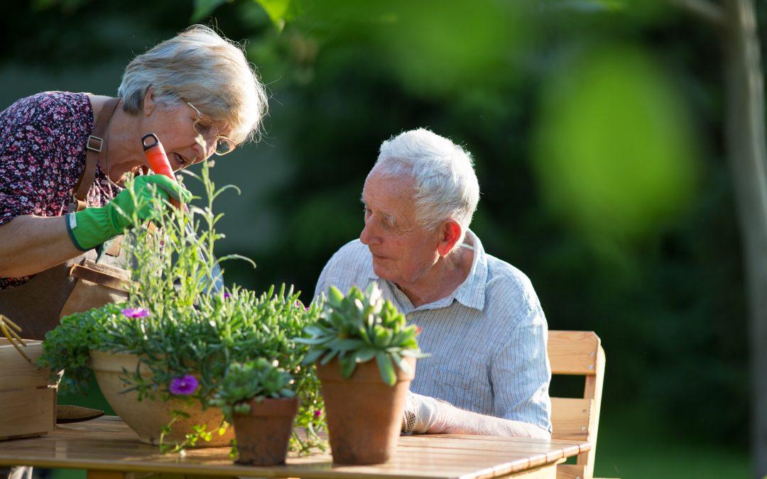 春天到园艺! 让你的花园开花的7个技巧